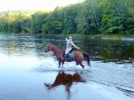 5 Things to Bring When You're Camping With Your Horse