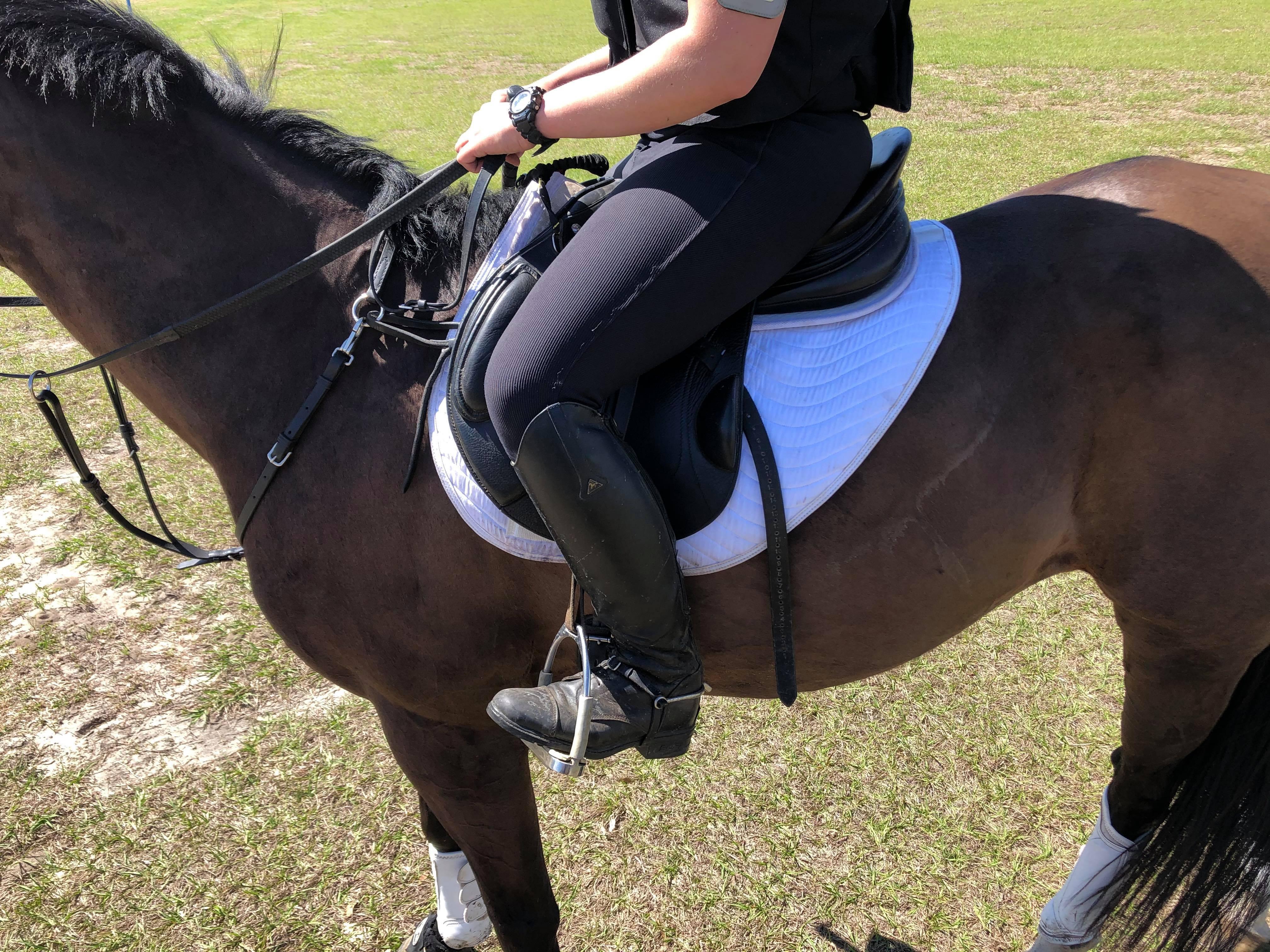 shaped saddle pad on horse