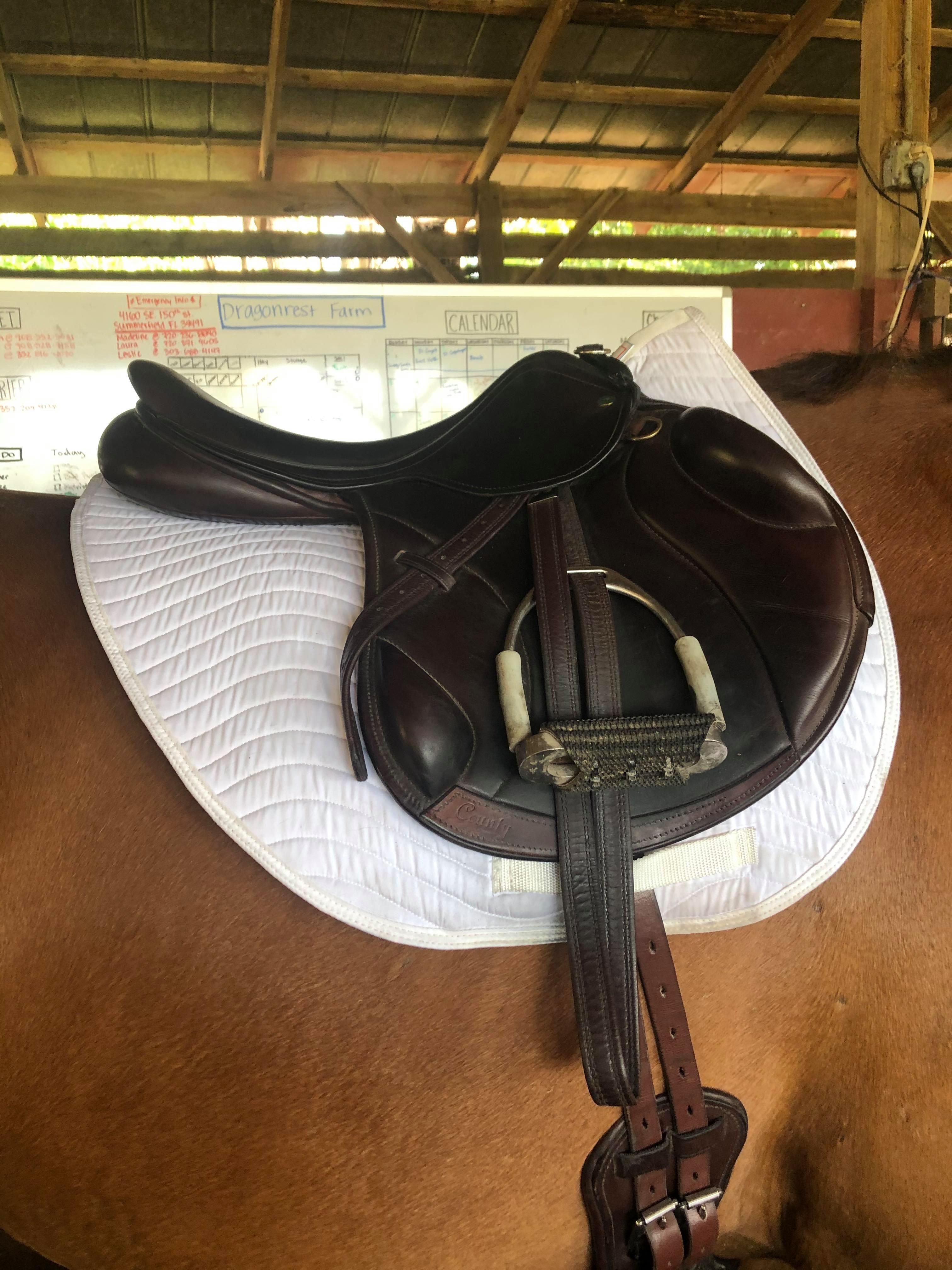 shaped all purpose saddle pad