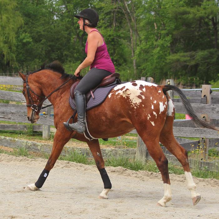 Draper Polos on a cantering horse