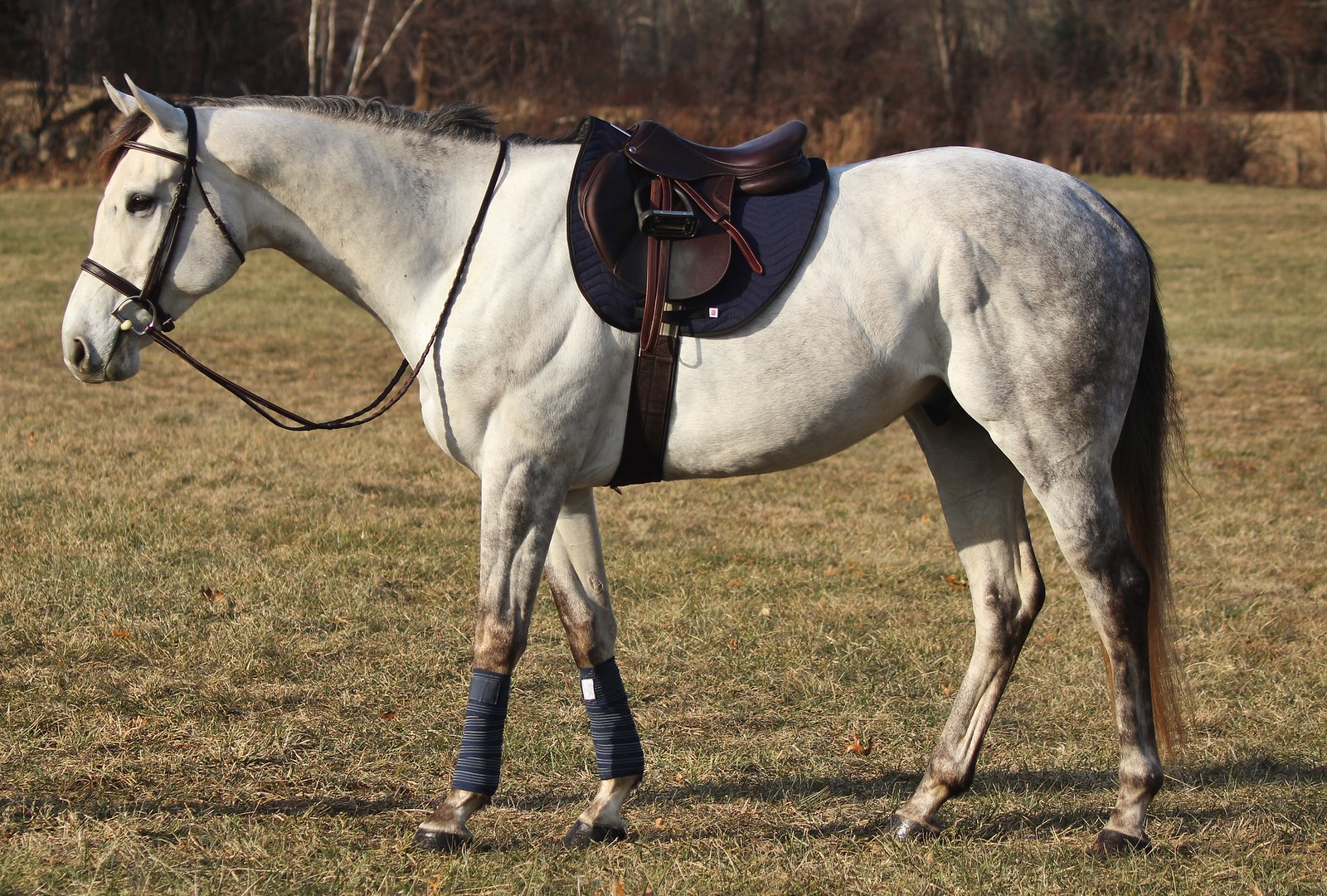 Navy All Purpose Pad on horse