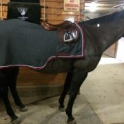 We don't even use a saddle pad under our Quarter Sheet!