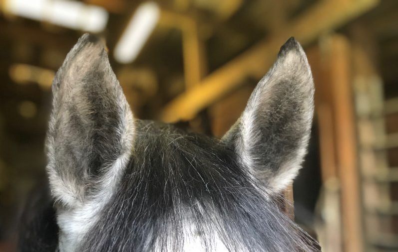 How to Tell if Your Horse is Comfortable