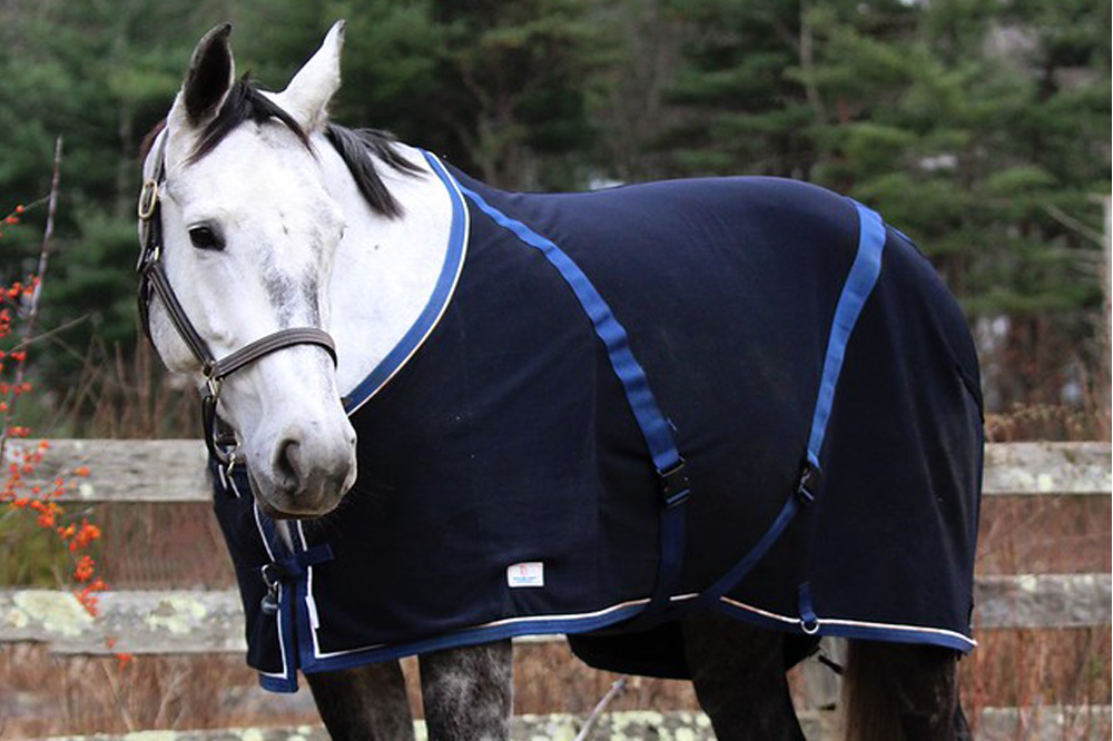 How to Help Horses Stay Warm in the Winter